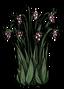 Buisson à baies juteuses