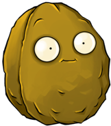 162px-walnut 5002