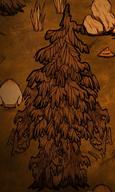 Guzowaty drzewiec