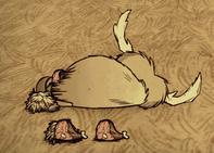 Martwy bawół