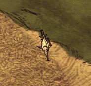 Miecznik na ziemi