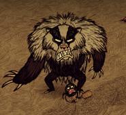 Atakujący borsuk