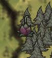Wabiąca roślina widoczna na mapie