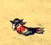 Papuga piratdss