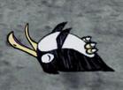 Śpiący pingwin