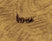 Trawa zebrana