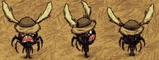 Webber bawola czapka