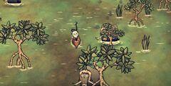 Wickerbottom w lesie namorzynowym (DSS)