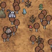 Las liściasty na mapie (RoG)