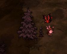 Sadzonka guzowatego drzewa w grze (DST)