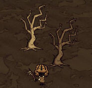 Odcienie Kolczastych Drzew