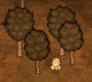 Drzewa liściaste w grze