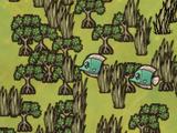 Las namorzynowy (DSS)