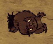 Śpiący świniołak