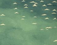 Ocean podczas pory spokojnej (DSS)