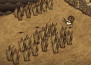 Trawa farma