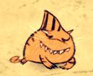 Mały rekin tygrysi