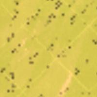 Darń trawiasta na mapie