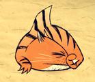 Rekin tygrysi DSS