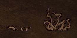 Zebrany i rozwinięty kolczasty krzak