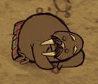 Śpiący wee tusk