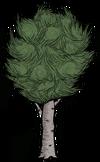 Drzewo liściaste (RoG)
