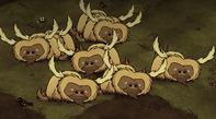 Grupa śpiących bawołów