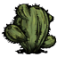 Kaktus jeziorny (DST)