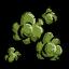 Puszyste nasiona (Gorge)