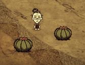 Kaktusy w grze