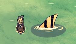Rekin w wodzie