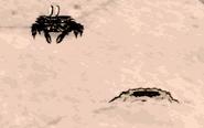 Krabling obok kopca krabów (DSS)