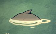 Uciekający wieloryb niebieski (DSS)