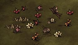 Farma motyli