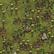 Dżungla na mapie (DSS)