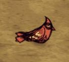 Śpiący czerwony ptak