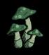 Zielony grzyb obiekt