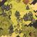 Zapadnięty las na mapie