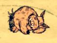 Świnia tubylec