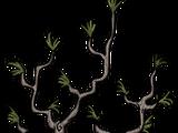Biom mozaikowy