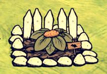 Słodki ziemniak na farmie (DSS)