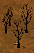 Spalone liściaste drzewa