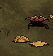 Zniszczone gniazdo zabójczych pszczół