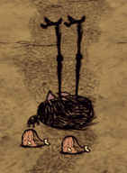 Martwy Wysoki ptak