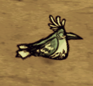 Śpiący śnieżny ptak
