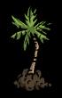 Sadzonka palmy (DSS)