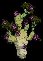 Kwitnące bulwiaste drzewo (DSH)