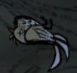 Martwy kanarek