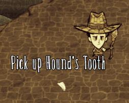 Psi ząb leżący na ziemi