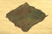 Darń dżungli na ziemi (DSS)